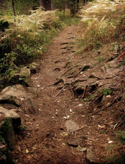 Camino de las aguas en Cercedilla